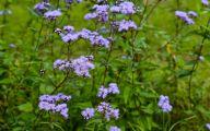 Blue Flowers In Fall  15 Desktop Background