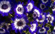 Blue Flowers In Fall  16 Background Wallpaper