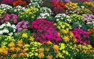 Blue Flowers In Fall  17 Widescreen Wallpaper
