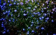 Blue Flowers In Fall  21 Desktop Wallpaper