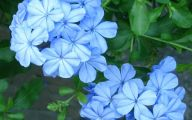 Blue Flowers In Fall  23 Background