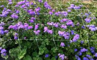 Blue Flowers In Fall  27 Free Wallpaper