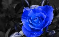 Blue Flowers In Fall  35 High Resolution Wallpaper
