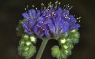 Blue Flowers In Fall  4 Free Hd Wallpaper