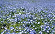 Blue Flowers In Japan  19 Free Wallpaper
