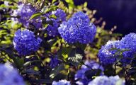 Blue Flowers In Japan  2 Cool Hd Wallpaper