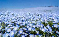 Blue Flowers In Japan  20 Free Hd Wallpaper