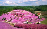 Blue Flowers In Japan  29 Free Wallpaper