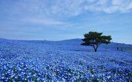 Blue Flowers In Japan  8 Widescreen Wallpaper