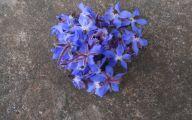 Blue Flowers In Season  14 Wide Wallpaper