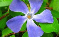 Blue Flowers In Season  16 Widescreen Wallpaper