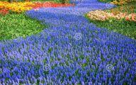 Blue Flowers In Season  19 Wide Wallpaper