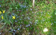 Blue Flowers In Season  24 Widescreen Wallpaper