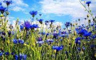 Blue Flowers In Season  25 Free Hd Wallpaper