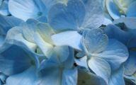 Blue Flowers In Season  9 Widescreen Wallpaper