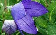 Blue Flowers July  9 Desktop Background
