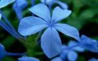 Blue Flowers June  31 Widescreen Wallpaper