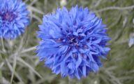 Blue Flowers June  9 Hd Wallpaper