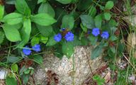 Blue Flowers Jungle  13 Cool Hd Wallpaper