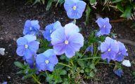 Blue Flowers Jungle  3 Hd Wallpaper