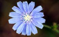 Blue Flowers Jungle  35 Free Hd Wallpaper