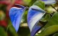 Blue Flowers London  13 Cool Hd Wallpaper