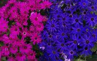 Blue Flowers London  2 Desktop Background
