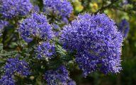 Blue Flowers London  23 Free Hd Wallpaper