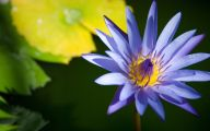 Blue Flowers London  27 Free Wallpaper