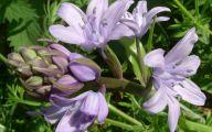 Blue Flowers London  29 Background Wallpaper