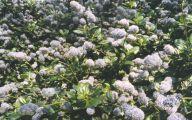Blue Flowers London  34 Wide Wallpaper