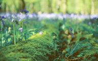 Blue Flowers London  6 Widescreen Wallpaper