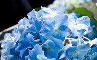 Blue Flowers Octagon  13 Background Wallpaper