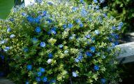 Blue Flowers On Bush  14 Desktop Background