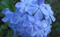 Blue Flowers On Bush  21 Free Wallpaper