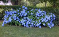Blue Flowers On Bush  28 Free Hd Wallpaper