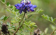 Blue Flowers On Bush  6 Wide Wallpaper