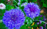 Blue Flowers On Pinterest  10 Background