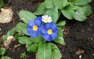 Blue Flowers On Pinterest  14 Wide Wallpaper