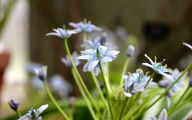Blue Flowers On Pinterest  17 Free Wallpaper