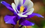 Blue Flowers On Pinterest  18 Background Wallpaper