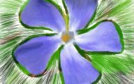 Blue Flowers On Pinterest  23 Free Hd Wallpaper