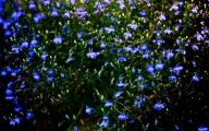 Blue Flowers On Pinterest  24 Background