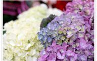 Blue Flowers On Pinterest  31 Desktop Background