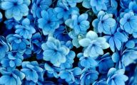 Blue Flowers On Pinterest  4 Free Hd Wallpaper