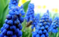 Blue Flowers On Pinterest  6 Desktop Wallpaper