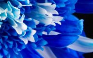 Blue Flowers On Pinterest  7 Desktop Background