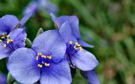 Blue Flowers On Pinterest  8 Widescreen Wallpaper