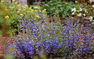 Blue Flowers Perennials  11 Free Wallpaper