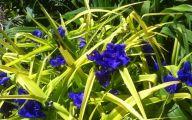 Blue Flowers Perennials  13 Free Hd Wallpaper